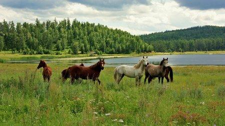 Краткое содержание Ф. Абрамов «О чем плачут лошади»